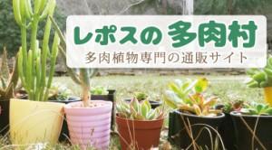 tanikumura-bana-small