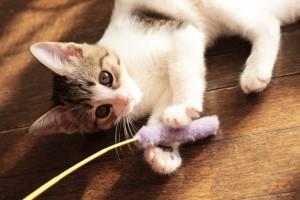 猫を幸せにする方法って?