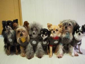犬にも幼稚園!?いまどきの犬や猫のライフスタイルとは!?