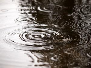 梅雨の時期を楽しむ、雨の日限定の演出やサービスを!!