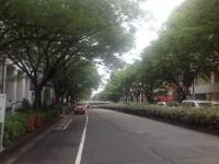 東京渋谷の表参道